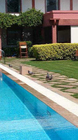 Trident, Agra: Pigeons in the pool area