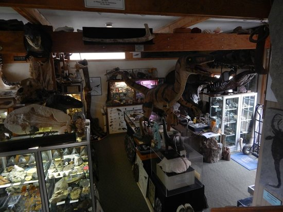 Past and Present: Fossil Gallery