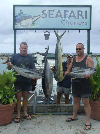 Seafari Fishing Charters: 31kg tuna and good size mahimahi