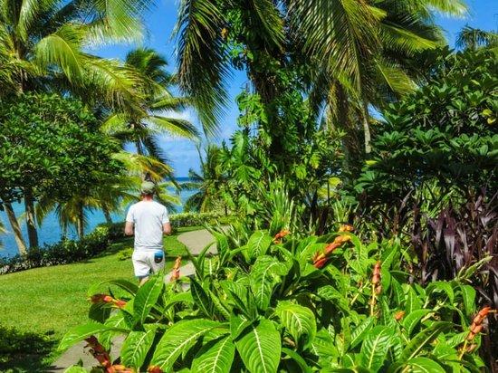 Warwick Le Lagon Resort & Spa, Vanuatu : Garden in front of Restaurant
