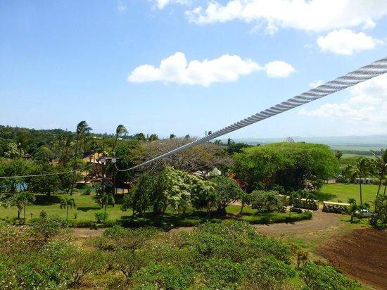 Maui Zipline Company: One of the five lines.