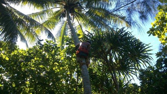 Koka Lagoon Cruises: Never seen anyone climb a tree so fast