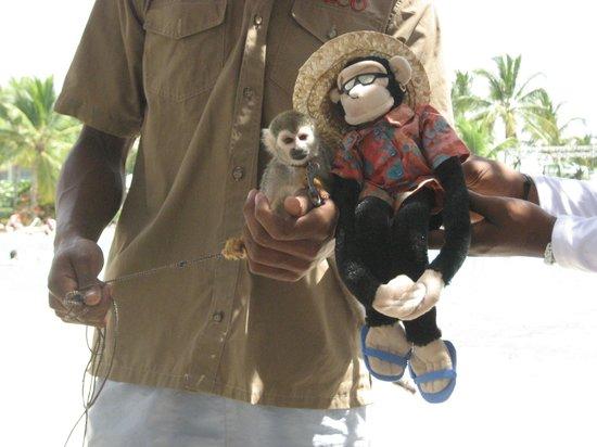 Dreams La Romana : Mick meets the monkey!
