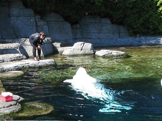 More About Vancouver Aquarium & Vancouver Aquarium Coupons Introduction Located in Stanley Park in Vancouver, British Columbia, Canada, Vancouver Aquarium is .