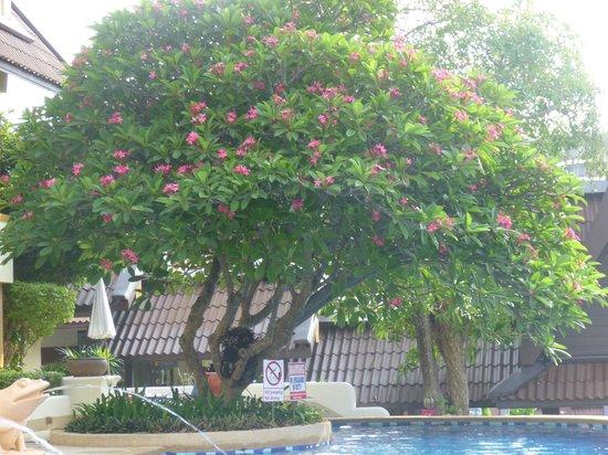 Diamond Cottage Resort & Spa: Цветущая растительноть