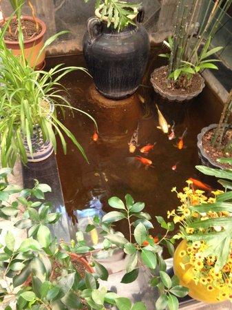 Michael's House : goldfish pool
