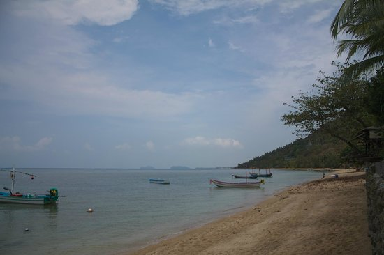 Coral Bungalows : The beach