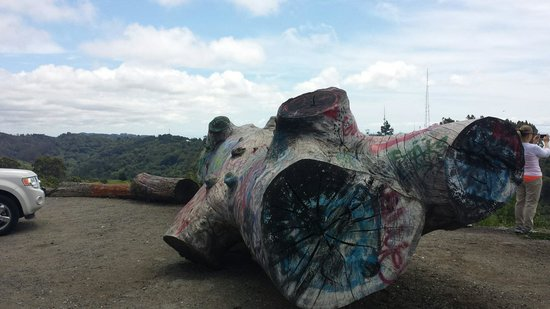 """Tilden Nature Area: Painted """"log"""" at Grizzly Peak"""