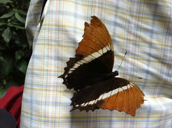 Jardin Botanico de Medellin : The guide said not to touch the butterflies, but they landed on us!