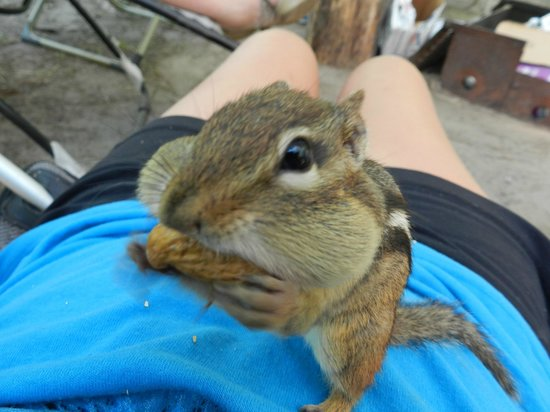 White Lake Provincial Park: Befriended these cute little guys. All you need is a bit of coaxing and peanuts.