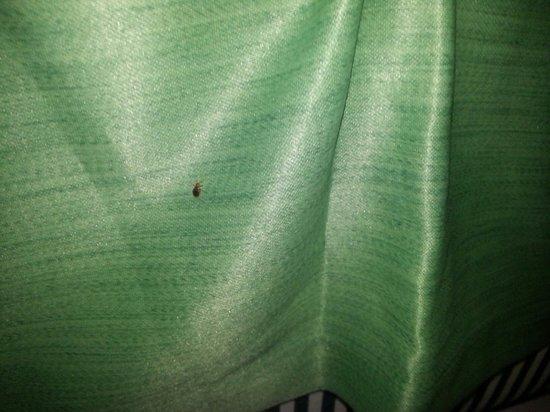 PP Charlie Beach Resort : Bed bug