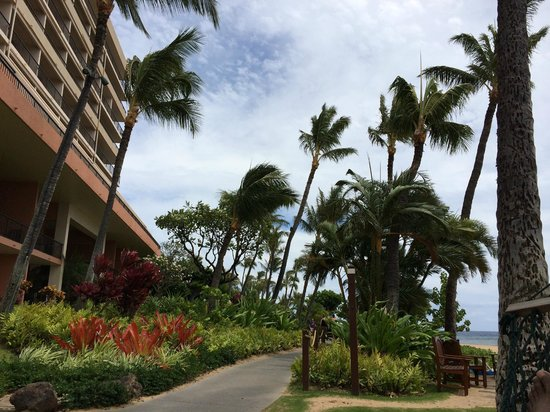 Marriott's Maui Ocean Club  - Lahaina & Napili Towers: morning walks were great.