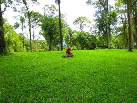 Kebun Raya Botani Bali : rumput hijau dan buku, kombinasi paling manis