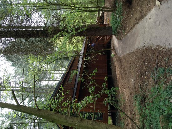 Forest Holidays Thorpe Forest: Our cabin