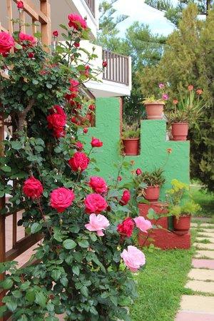 Gaia Garden : Замечательный декор территории