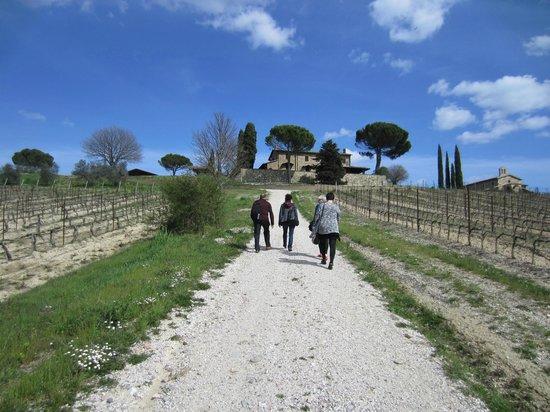 Decugnano Dei Barbi Cooking Class: Walking around