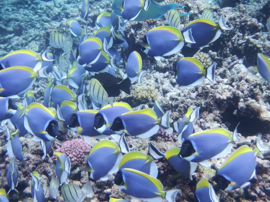 Paradise Sun : Myriad of fish seen on snorkeling trip with Sagittarious from Anse Volbert