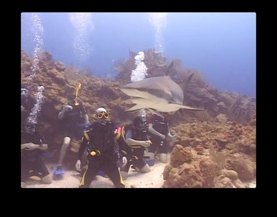 Roatan Shark Dive: Shark, with us in the background :)