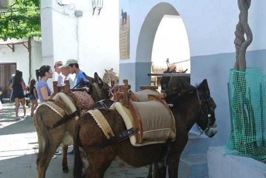 Lindos : les ânes à l'entrée du village(5 euros)