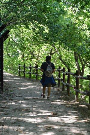 Seokguram: Lovely, shady trail