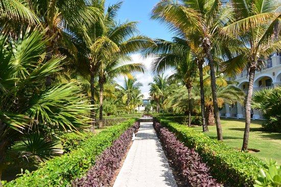 Dreams Tulum Resort & Spa : Hotel gardens