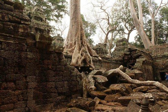 Ta Prohm: джунгли наступают в прямом смысле