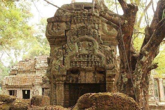 Ta Prohm: храм, кстати, сейчас реставрируется