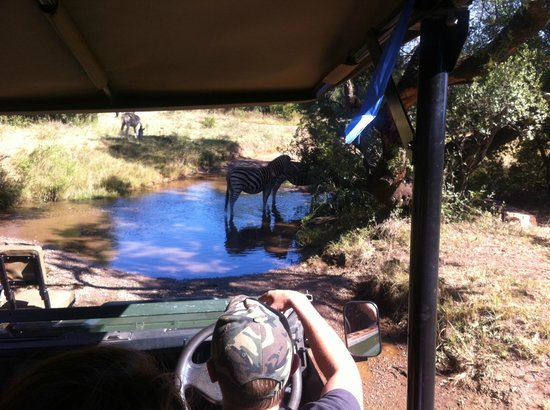 Glen Afric Country Lodge: game drive