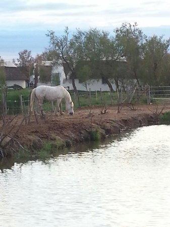 L'Auberge Cavaliere Du Pont Des Bannes : Le Cavaliere