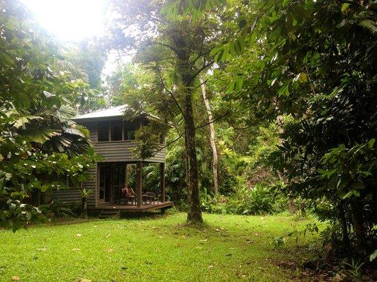 Ferntree Rainforest Lodge: .