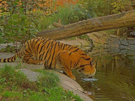 Wroclaw Zoo & Afrykarium : ZOO Wrocław