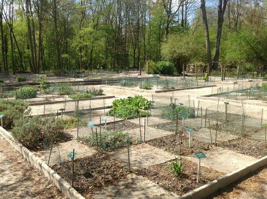 Abbaye de Vauclair : Vue du jardin aux simples