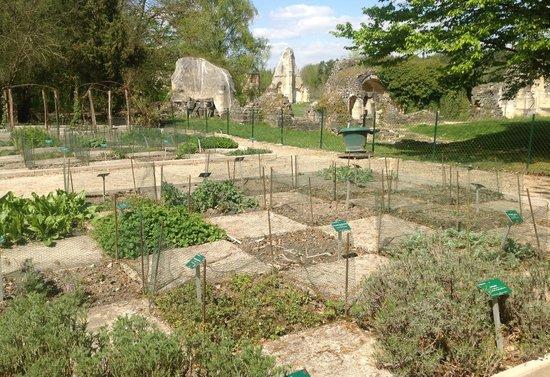 Abbaye de Vauclair : Dans le jardin aux simples
