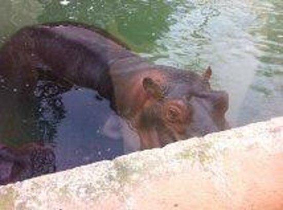 Zoobotánico Jerez: Hippo