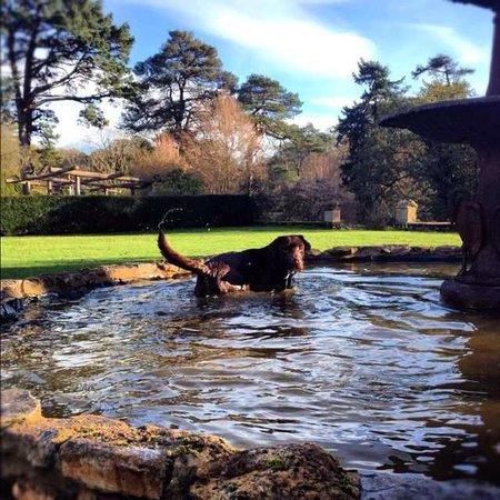 Culmhead House: The Dog Taking A Bath!