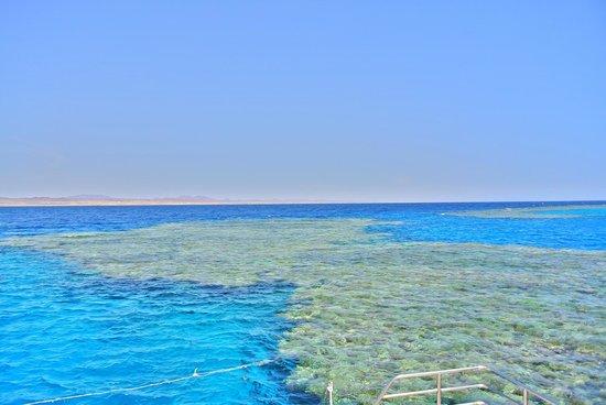 El Malikia Resort Abu Dabbab: Diving e snorkling a Marsa Mubarak vicino Port Ghalib