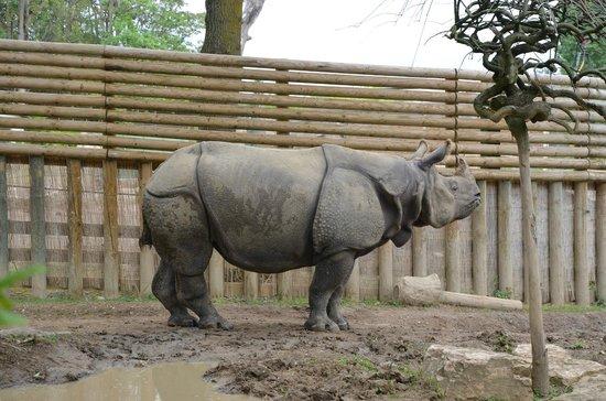 Touroparc Zoo : A voir