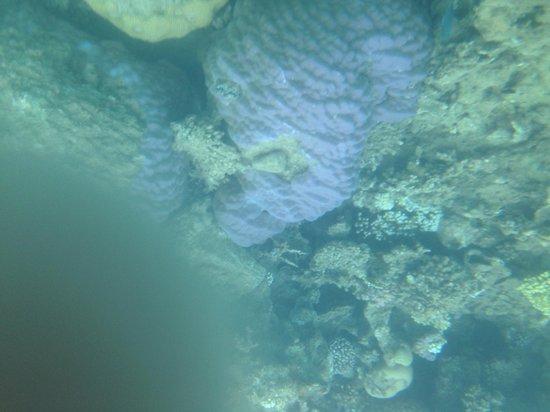 Bedouin Divers Dahab: Coral reefs