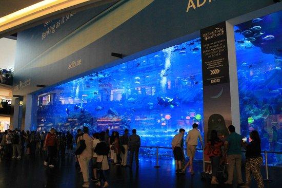 The Dubai Mall : Acquarium