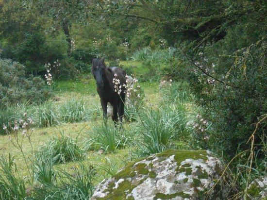 Parco della Giara Tuili: cavallini della Giara