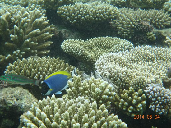 Angaga Island Resort : 珊瑚