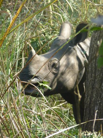 Rhino in community forest