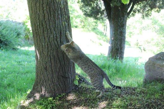 Locanda del Gallo: Sirio! l'unico gatto a venire in passeggiata