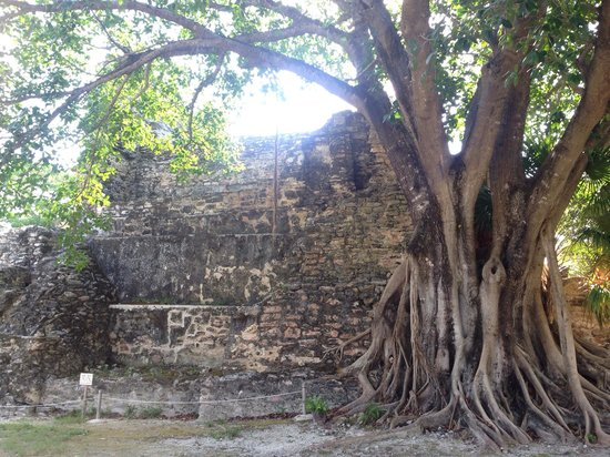 El Meco Ruins: Cool tree growing on the building
