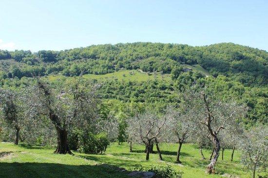 Locanda del Gallo: gli ulivi