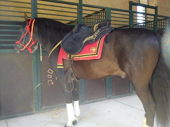 Caballerizas Reales de Cordoba: Royal stables