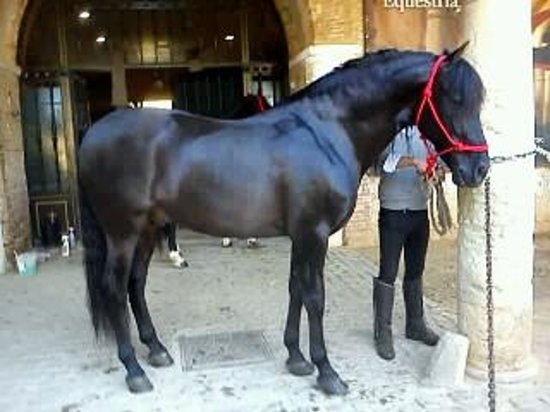 Caballerizas Reales de Córdoba: Getting ready to thrill