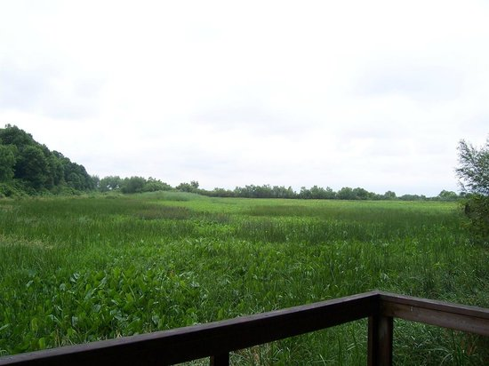 Fish Point Nature Reserve: View off viewing platform