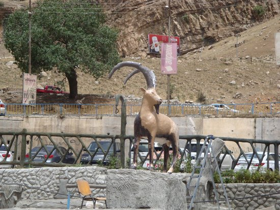 Gali Ali Bag: wild goat