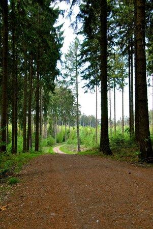 Romantik-Parkhotel am Hammerberg: Forest close to the hotel.